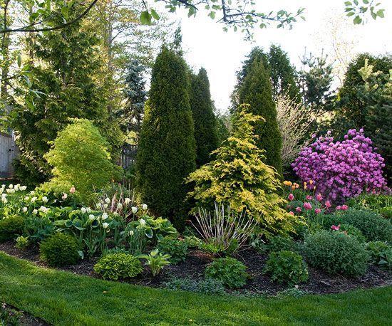 best arborvitae landscaping ideas on pinterest