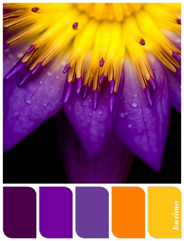 Purple & yellow