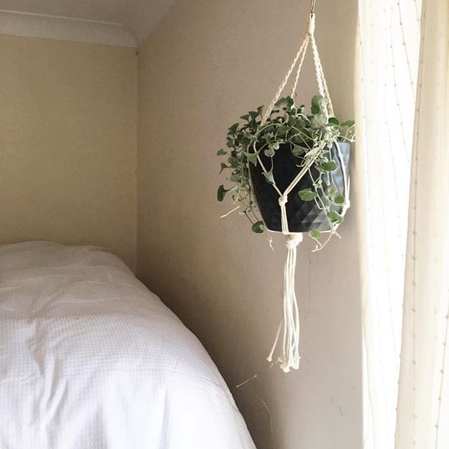 Love a little greenery in he bedroom 🍃 Photo credit @jessgoldy Feat our Desert sand Macrame