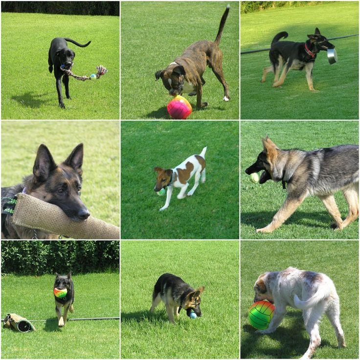 Το παιχνίδι για τον σκύλο είναι πολύ σημαντικό. Τον κρατά σε καλή φυσική κατάσταση τον κάνει πιο έξυπνο , βελτιώνεται η ψυχολογία του και δυναμώνουν οι σχέσεις μας!Σε ένα παιγνιδιάρικο κλίμα γίνεται και η εκπαίδευση πιο αποτελεσματική!