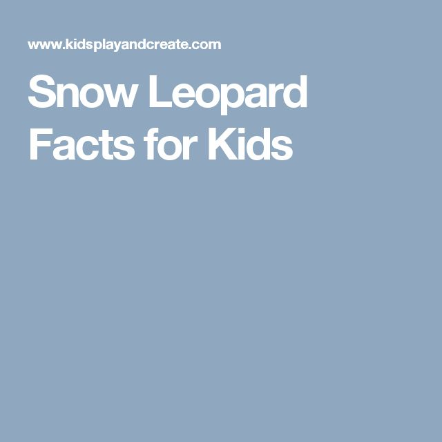 Snow Leopard Facts for Kids