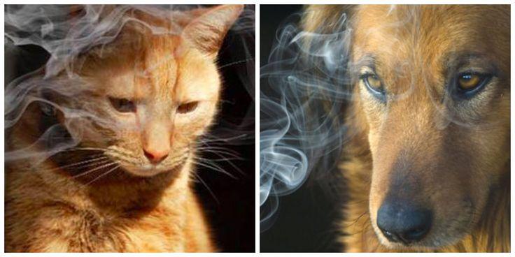 Heb jij er weleens over nagedacht? Zó schadelijk is sigarettenrook voor je huisdier