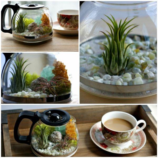 Kaffeekanne-Terrarium mit herrlichen Luftpflanzen selber gestalten …