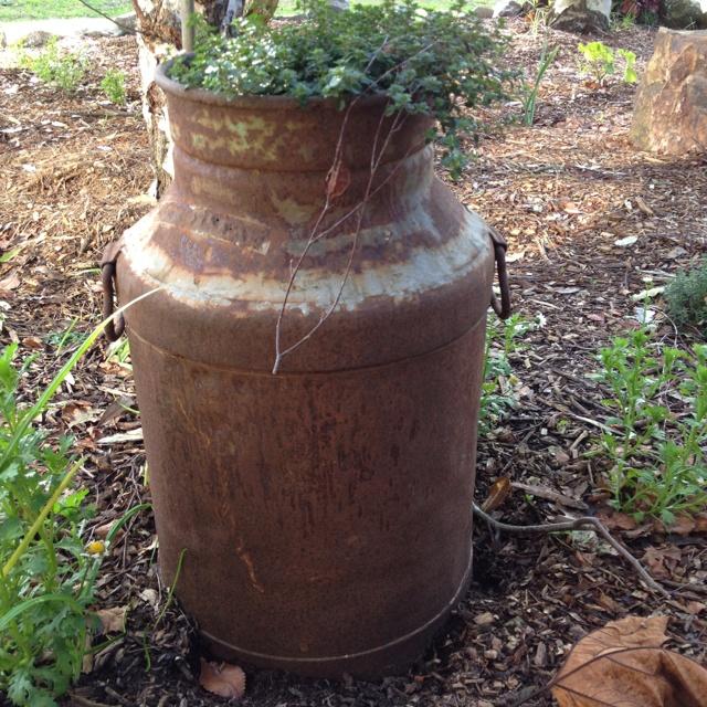 My herb pot
