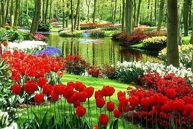 10 Haufige Fehler Beim Tomatenanbau Im Garten Garten Der Welt Most Beautiful Gardens Beautiful Gardens Beautiful Flowers Garden