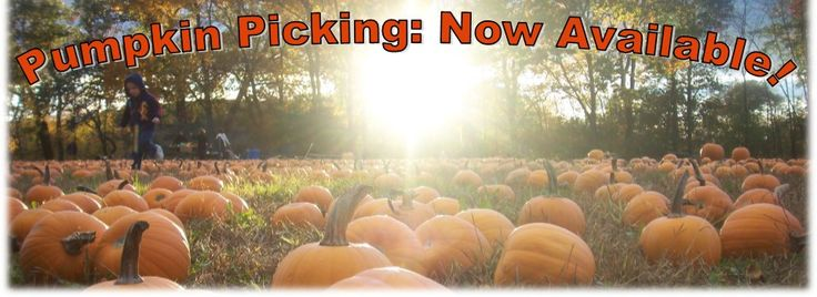 Horse Sleigh Farm | Pumpkin Picking NJ, Hayrides, Corn Maze, Pick Your Own, Haunted Hayrides | New Jersey's Favorite Farm