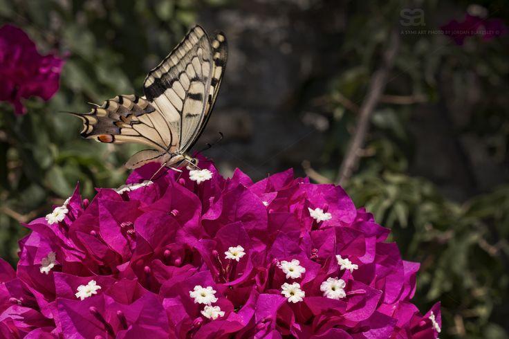 Wild Wings. Photograph by Jordan Blakesley @symiart