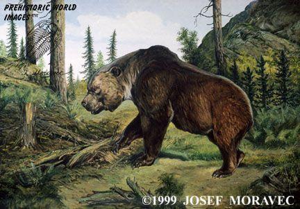 Arctodus simus - Prehistoric animals - Pleistocene