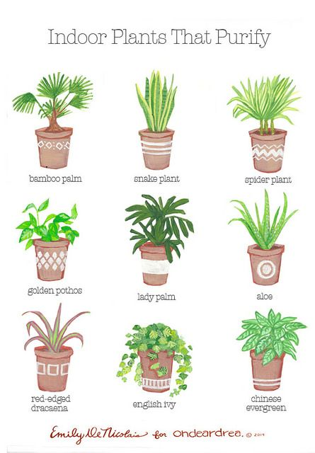 ohdeardrea: indoor plants that purify guide