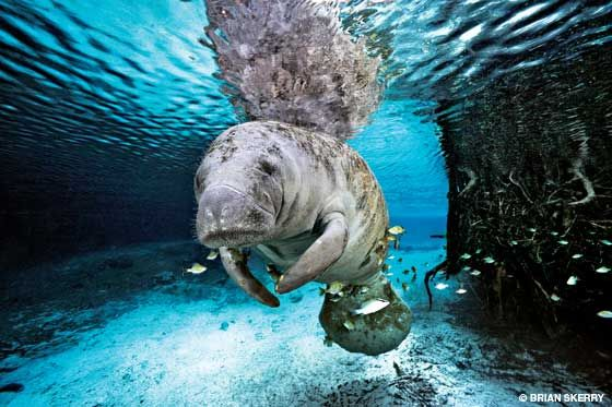 Alert Diver   Brian Skerry: The Art of Marine Conservation