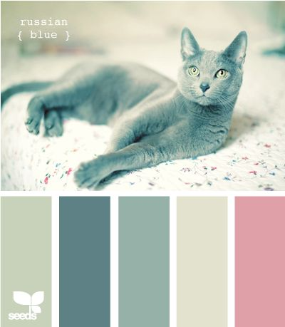 "Nature-made color - ""russian blue"" (!). I love this cat. Anyway, blue-gray with a touch of dusty rose; need more of a touch than this picture shows. Good for a bedroom."