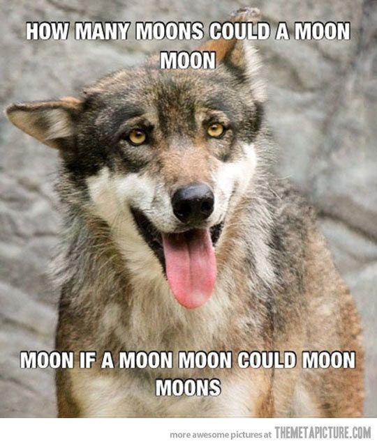 How many moons could a Moon Moon moon… Dang it Moon Moon get your s#$t together.