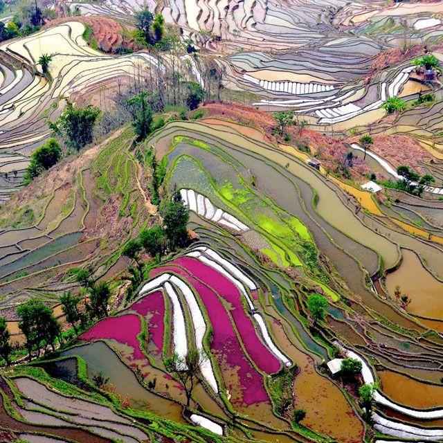 Terraced Rice Field Yunnan, China