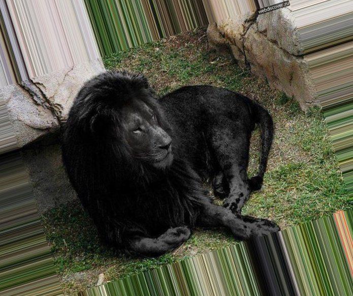 Оригинал схемы «Черный лев»