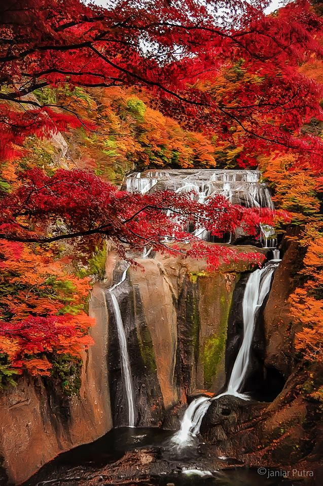Fukuroda Falls, Ibaraki, Japan: photo by Janiar Putra 袋田の滝 ... same falls a little later, now all the leaves are turning...just beautiful!