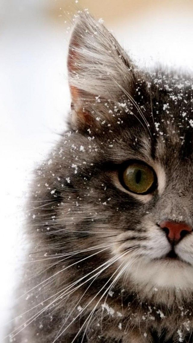 adorble snowy cat... why cant we have snow here