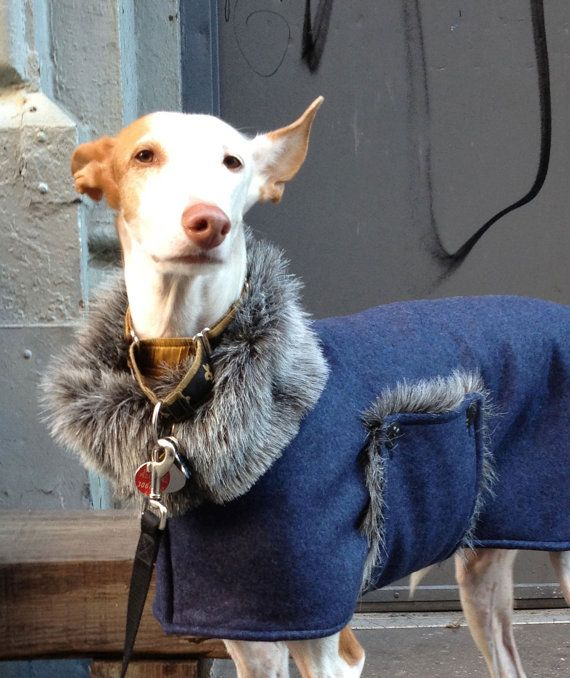 The Elegant Hound Coat - to be custom made for your Ibizan Hound, Greyhound or other large dog on Etsy, $125.00                                                                                                                                                                                 More