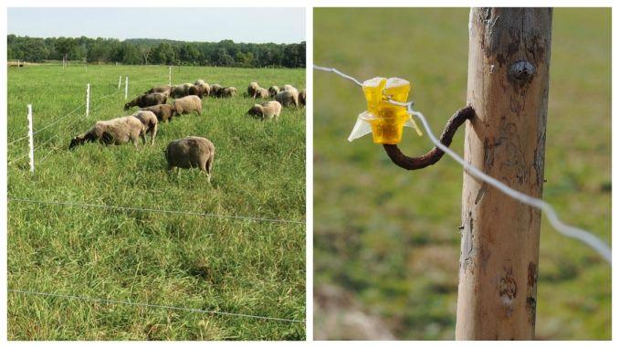 gard electric animale instalare