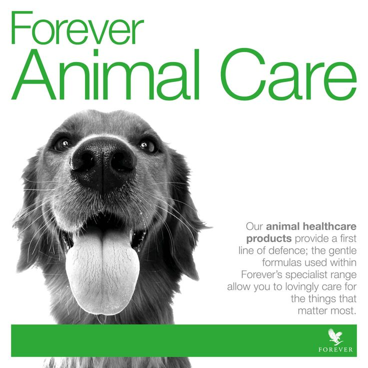 Share the goodness of Forever Living Products with your pets too! http://link.flp.social/wpI653