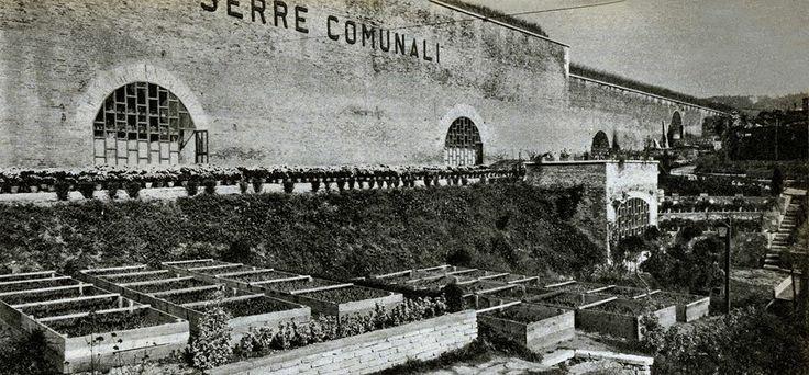 Serre comunali - Anni '50 http://www.veronavintage.it/verona-antica/immagini-storiche-verona/serre-comunali-anni-50