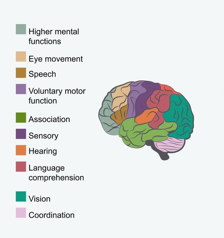Language and Our Brains  #Education #Language #Brain #Kids