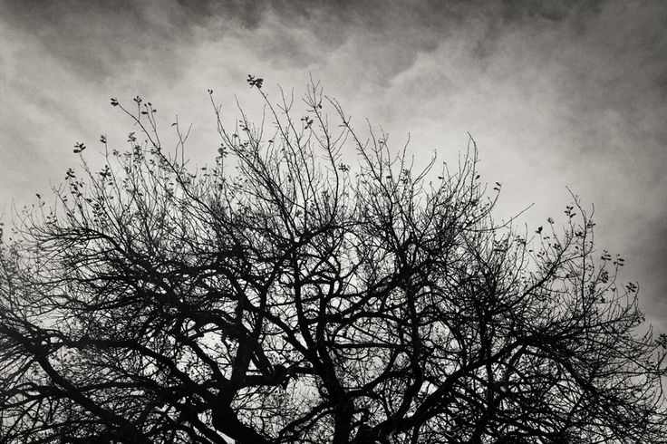 Fine Art Photography Prints. Black and White landscapes. Reaching Trees... Order prints at nataschavniekerk@gmail.com
