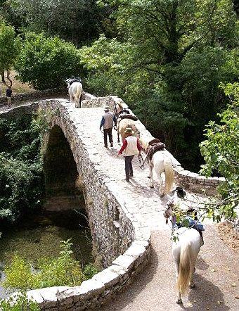 Les Chevaux de Calberte - riding in the Cevennes mountains