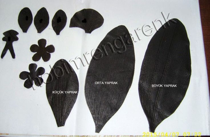 orchid skin patterns