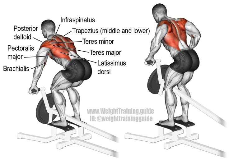 T-bar row. A major compound exercise for major upper-body strength! Target muscle: None. Multiple back, arm, and shoulder muscles act in synergy. Synergists: Latissimus Dorsi, Middle and Lower Trapezius, Rhomboids, Teres Major, Posterior Deltoid, Infraspinatus, Teres Minor, Brachialis, Brachioradialis, and Pectoralis Major.