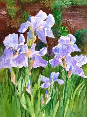Irises in Valentine's Park