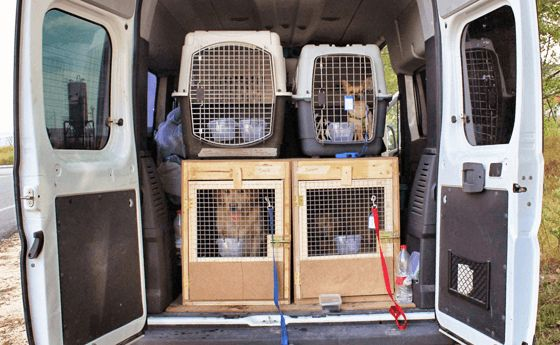 Be Familiar With Your Loved Animal's Transportation Services