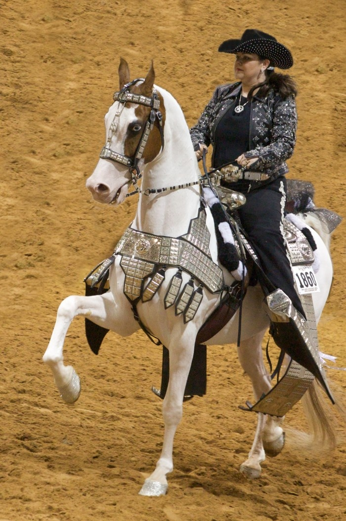 1000 images about american saddlebred parade horses on