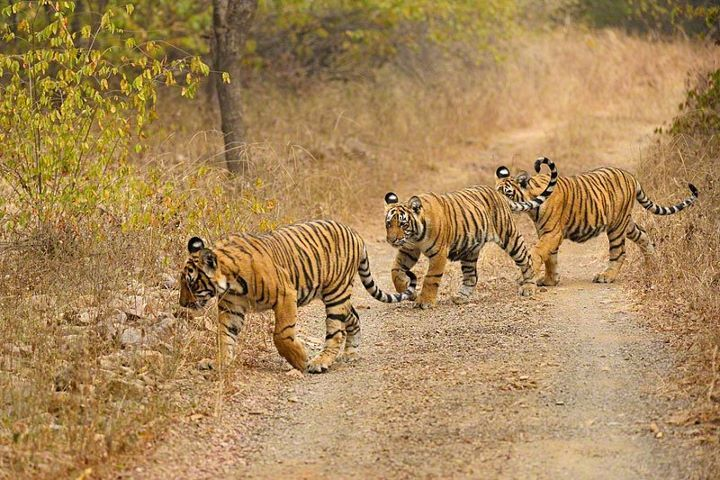 Wildlife Conservation- the first and foremost effort to save environment