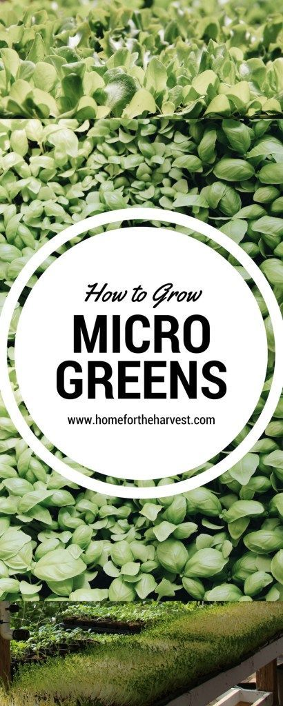25 best ideas about homemade greenhouse on pinterest for Best growing medium for microgreens
