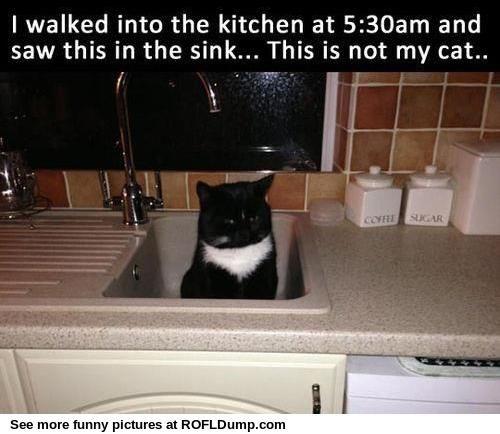 Kitchen Sink Jokes: Not My Cat ROFL Dump