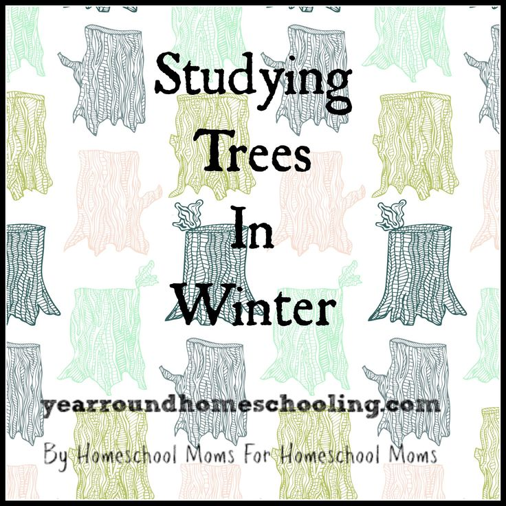 Studying the trees in the winter can be lots of fun! Check out this great post from Beth and discover what your children can learn this winter!