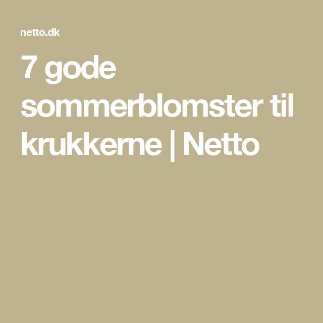 7 gode sommerblomster til krukkerne | Netto