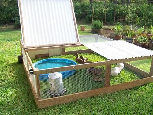 #DIY duck or chicken pen for the birds to sleep in at night and be protected. This is a great idea for a rabbit run I want to make for my Hollands.