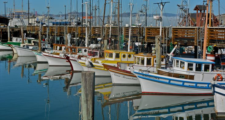 Fisherman's Wharf San Francisco.  We saw otters by the boats.
