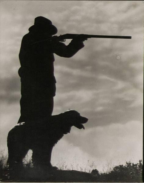 Pheasant hunting with bird dog