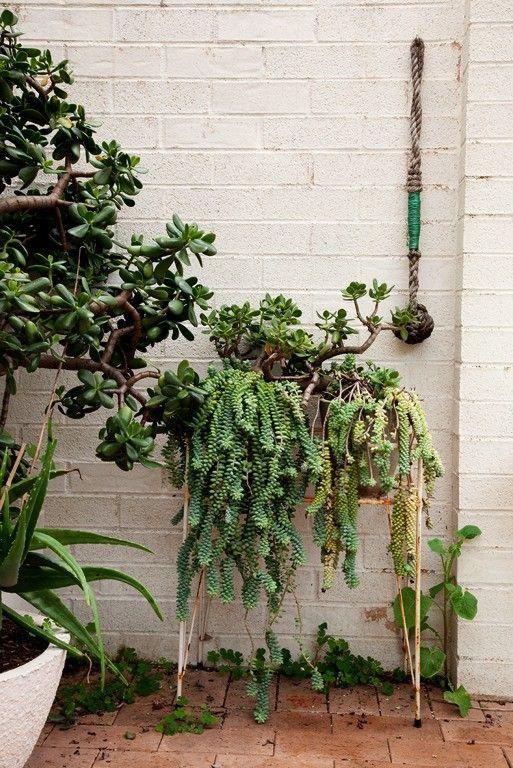 : Donkeys Tail, Gardens Ideas, Plants Stands, Jade Plants, Succulents Plants, Hanging Plants, Succulents Gardens, Contemporary Gardens, Gardens Succulents