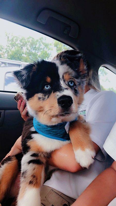 Frischer Schnitt. Die nette Dame gab mir ein Halstuch und einen Leckerbissen!   – Dogs