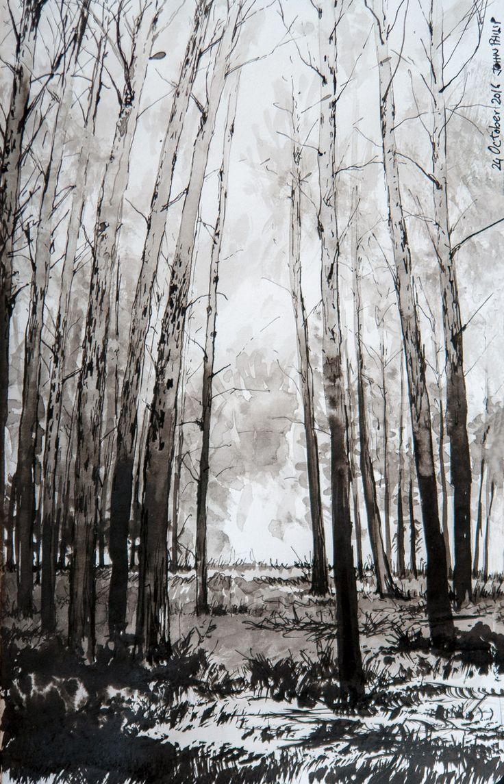 Day 24 - Forest in Ink #inktober #inktober2016 http://www.johnphilip.co.za/?p=1438