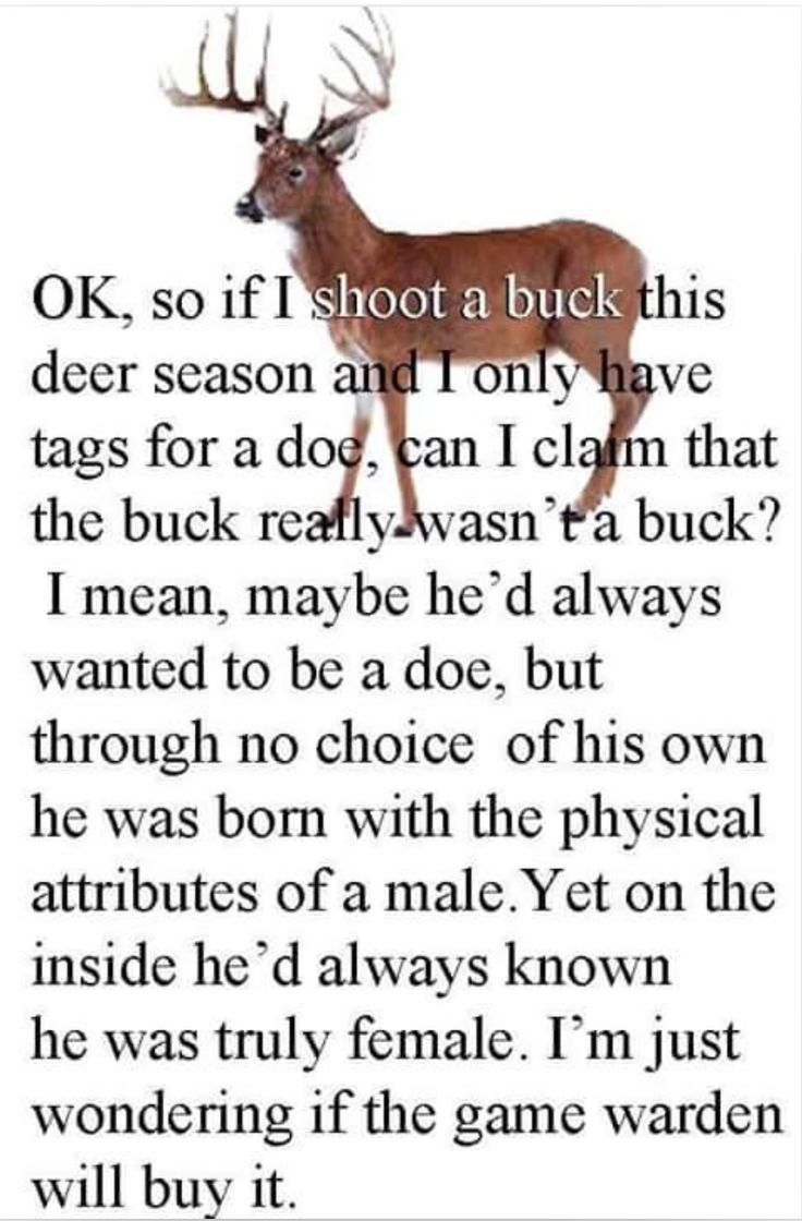 Funny Hunting Quotes 221 Best Just A Thought Images On Pinterest  Ideas Tanks And