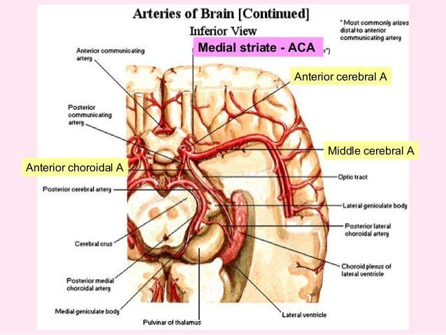 144 best neuroanatomy images on pinterest med school
