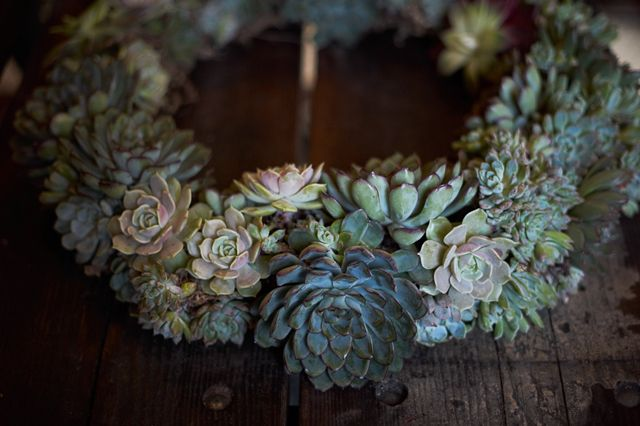 Succulent Wreath DIY by Denise Porcaro via honestlystf #DIY #Succulent_Wreath #Denise_Porcaro #honestlywtf
