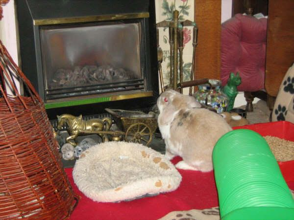 Nutmeg often sits and stares at the fire, probably willing it to turn on!