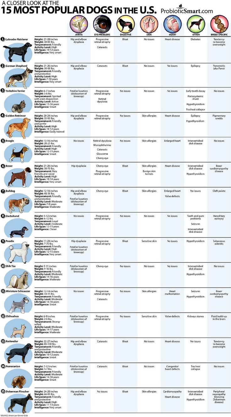 Finding the best names for dogs dog check and animal nvjuhfo Choice Image