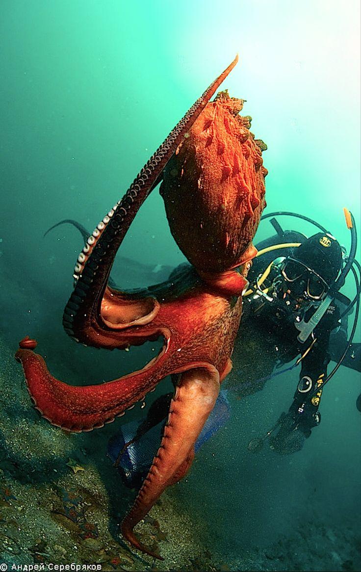Атака осьминог фото