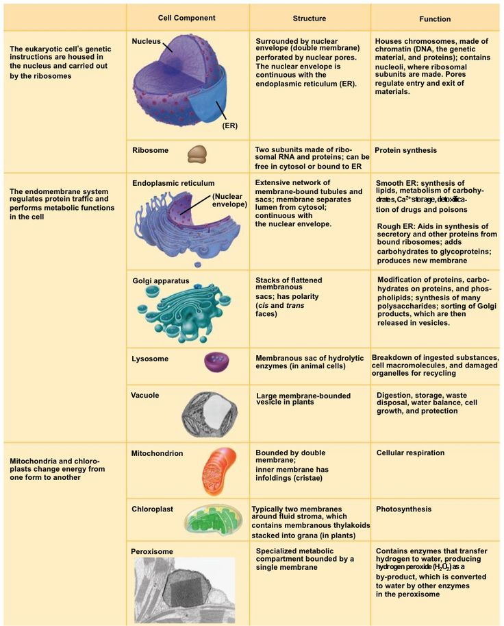 Organelle with Its Function - Bing Images | Biology | Pinterest ...